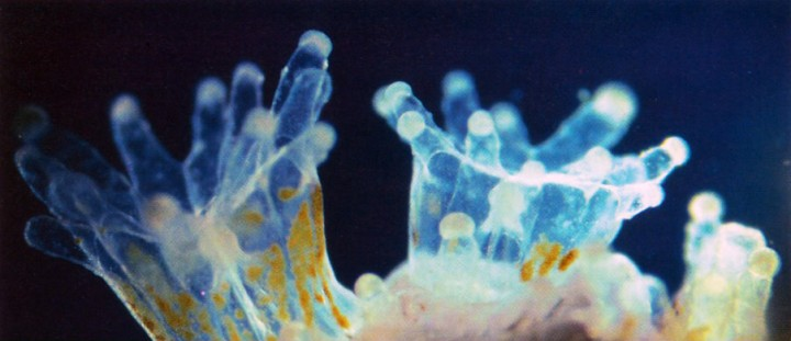 The Polyps of a Stony Coral